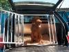 Einzelhundebox für BMW X5